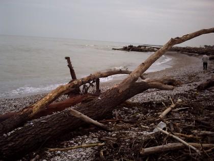 Un mare di … legna ancora lì dalla mareggiata del 2013