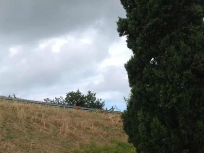 Fano, due cerbiatti bloccano il casello autostradale