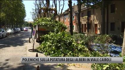 Fano, polemiche sulla potatura dei platani in Viale Cairoli – VIDEO
