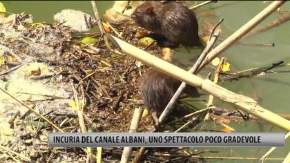 Incuria del Canale Albani, uno spettacolo poco gradevole – VIDEO