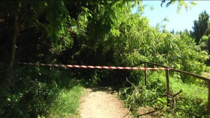 Albero cade sulla pista ciclo-pedonale dell'Arzilla – VIDEO