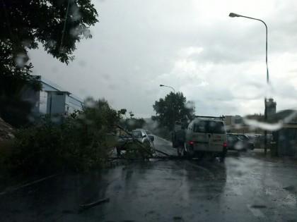 Forte temporale in città e nell'entroterra. Molti alberi e rami abbattuti – FOTO – VIDEO