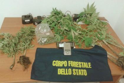 Coltivavano Cannabis a Mombaroccio, denunciati due giovani colti in flagranza