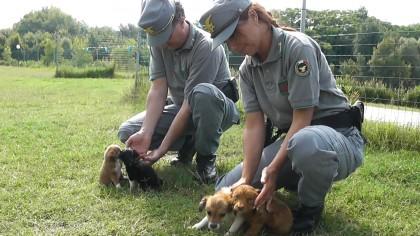 Forestale stronca commercio illegale di cani. Sequestrati 8 cuccioli e 19 gatti, tre denunce