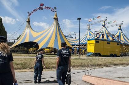 """Guardie zoofile OIPA al Prefetto: """"Il Circo Orfei non è idoneo, sospendere l'autorizzazione"""""""