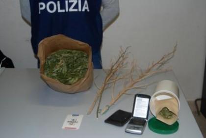 Coltivava marijuana e la nascondeva in casa: denunciato un 34enne di Urbino