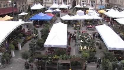 Pesaro, Mostra Mercato dei fiori dal 3 al 5 ottobre – VIDEO
