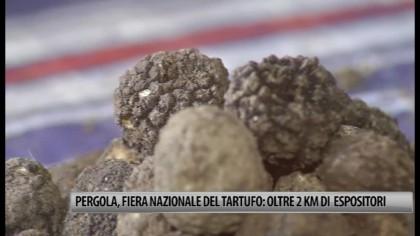 Pergola, Fiera Nazionale del Tartufo: oltre 2 km di espositori – VIDEO