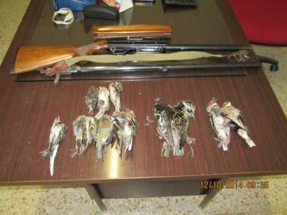 Abbattono uccelli protetti: sanzionati e denunciati cacciatori, senza autorizzazione per l'esercizio venatorio