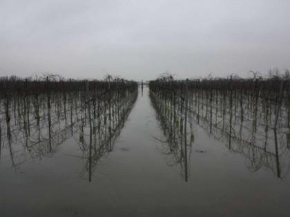 Alluvione maggio: entro il 3 novembre le domande per i danni alle imprese agricole