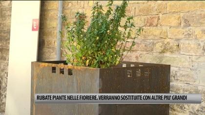 Rubate le piante nelle fioriere del centro storico di Fano. Verranno sostituite con altre più grandi – VIDEO