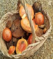 La 'Festa del Fungo' di San Sisto accende i riflettori sul valore dei prodotti tipici