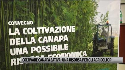 Coltivare canapa sativa: una risorsa per gli agricoltori – VIDEO