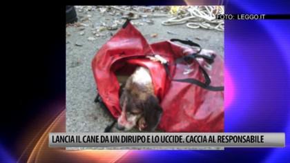 Lancia il cane da un dirupo e lo uccide. Si cerca il responsabile – VIDEO