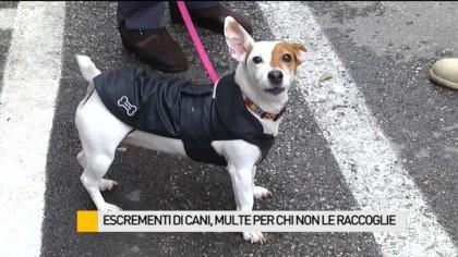 Escrementi di cani, multe per chi non li raccoglie – VIDEO