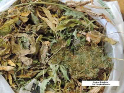Hashish marijuana3