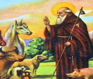 Festa di S.Antonio a Serrungarina, patrono del territorio, uomo di Dio e degli uomini