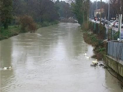 Versate sostanze inquinanti nel canale Albani