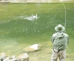 Pesca in acque interne, approvato dalla regione il calendario 2015