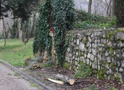 Maltempo, donna muore schiacciata da un albero