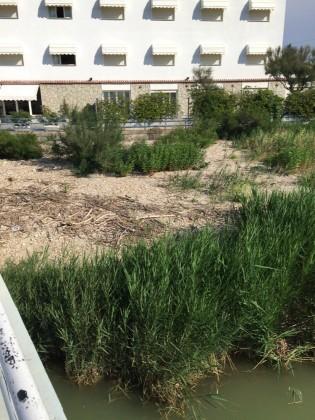 """Zona Arzilla, Garbatini: """"Ecco il degrado delle spiagge libere"""""""