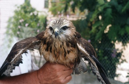 """""""Centro recupero animali selvatici"""", Tagliolini si confronta con le associazioni ambientaliste."""