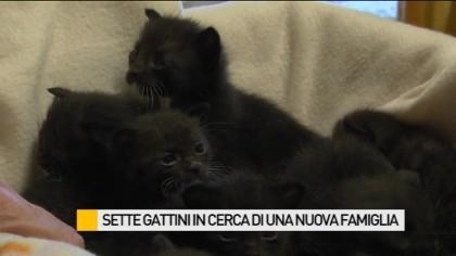 Sette gattini in cerca di una nuova famiglia – VIDEO