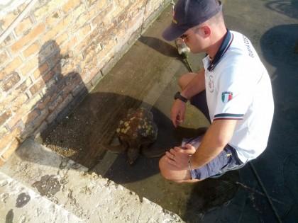 Recuperata tartaruga marina. Chiamata Lorenzo in ricordo del Santo del 10 Agosto