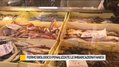 Fermo biologico penalizzate le imbarcazioni fanesi – VIDEO