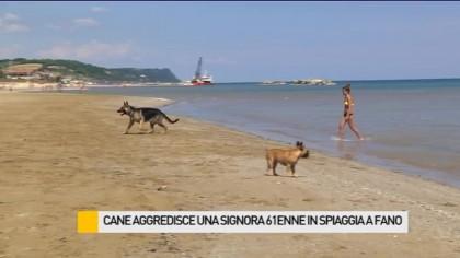 Meticcio aggredisce una signora 61enne in spiaggia a Fano – VIDEO