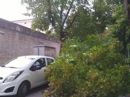 Grosso ramo cade vicino ad un'auto