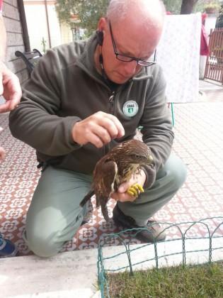Uccello-Poiana (3)
