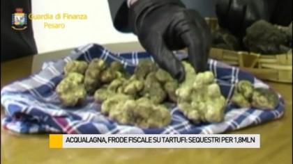 Frode fiscale su tartufi, Gdf sequestra beni per 1,8 milioni – VIDEO