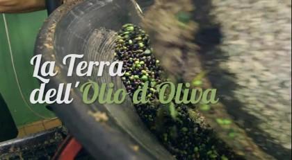 La terra dell'olio d'oliva