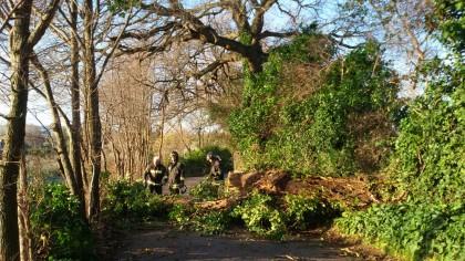 Albero caduto in Strada Comunale San Michele - Fano
