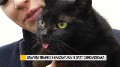 Una vita tra feci e spazzatura: 19 gatti in cerca di una casa – VIDEO