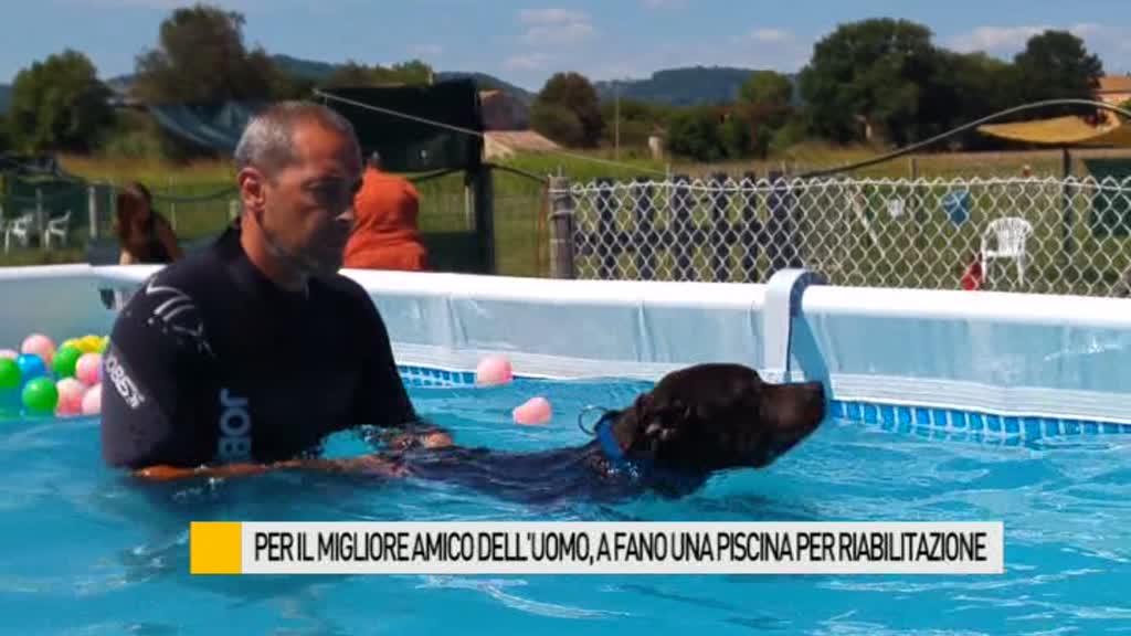 Per il migliore amico dell'uomo, a Fano una piscina per riabilitazione – VIDEO  Occhio alla Notizia