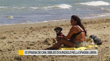 Ex spiaggia dei cani, obbligo di guinzaglio nella spiaggia libera – VIDEO