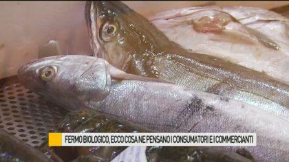 Fermo biologico, per tre settimane stop alle reti in mare. Cosa ne pensano consumatori e commercianti – VIDEO
