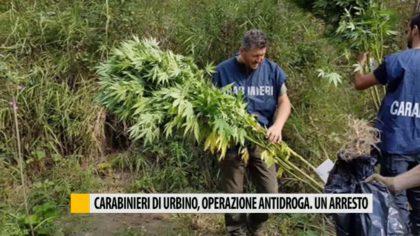 Carabinieri di Urbino, operazione antidroga. Un arresto – VIDEO