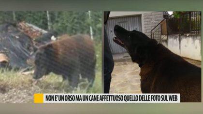 Pergola, mistero risolto: non è un orso ma un affettuoso cane  – VIDEO