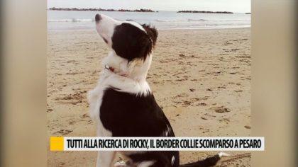 Tutti alla ricerca di Rocky, il border collie scomparso a Pesaro – VIDEO