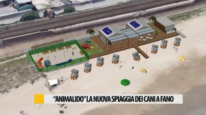 """Arriva """"Animalido"""" la nuova spiaggia dei cani a Fano – VIDEO"""