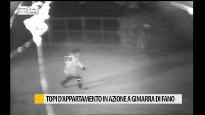 Topi d'appartamento in azione a Gimarra di Fano