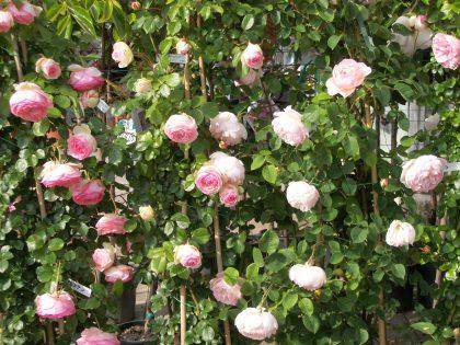 Regala un fiore a chi ti ha regalato la vita, un piccolo gesto per far felice la mamma.