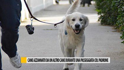 Cane azzannato da un'altro cane durante una passeggiata col padrone