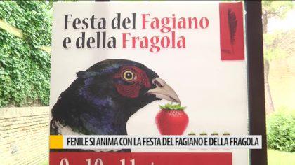 Fenile si anima con la festa del Fagiano e delle Fragola