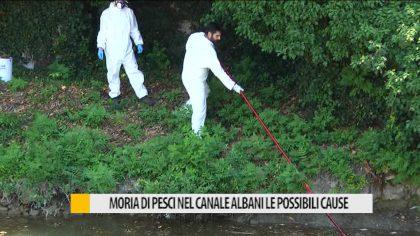 Morìa di pesci nel canale Albani, le possibili cause