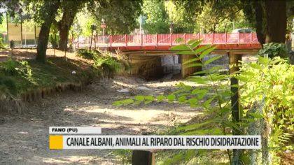 Canale Albani, animali al riparo dal rischio disidratazione