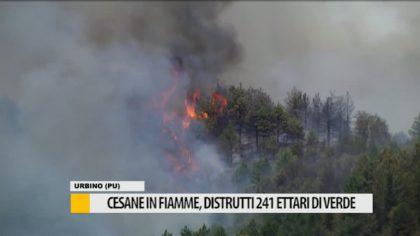 Cesane in fiamme, distrutti 241 ettari di verde